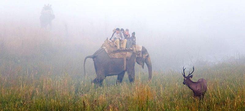 Sambar_Deer_in_Jim_Corbet_National_Park